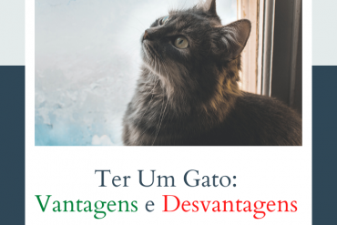 descubra as vantagens e desvantagens de ter um gato