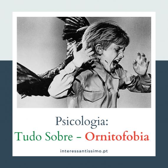 tudo sobre ornitofobia, causas, sintomas e possiveis tratamentos